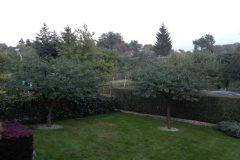 Kilka fotek z ogrodu...